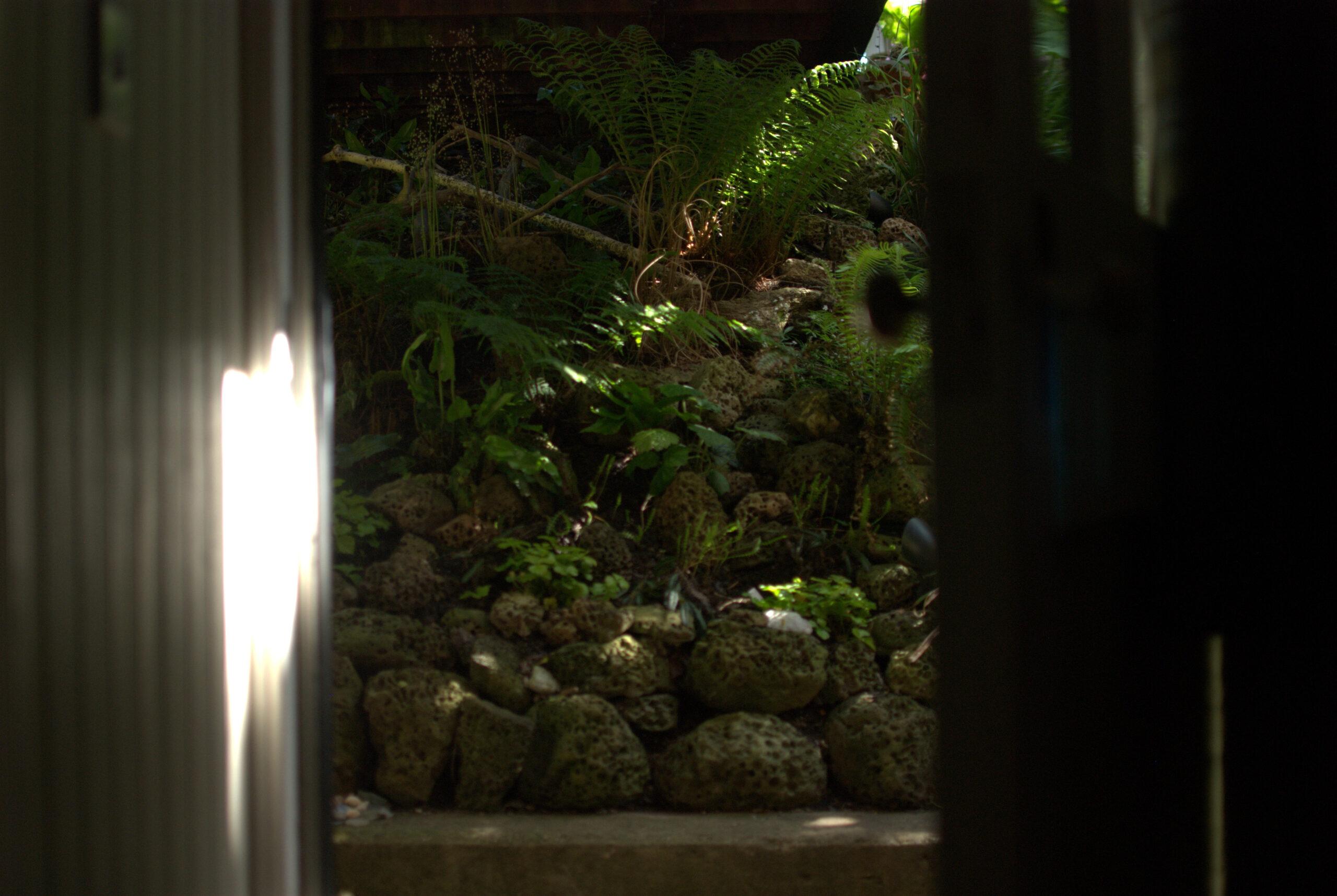 Glimpses of the limestone rockery and fern garden